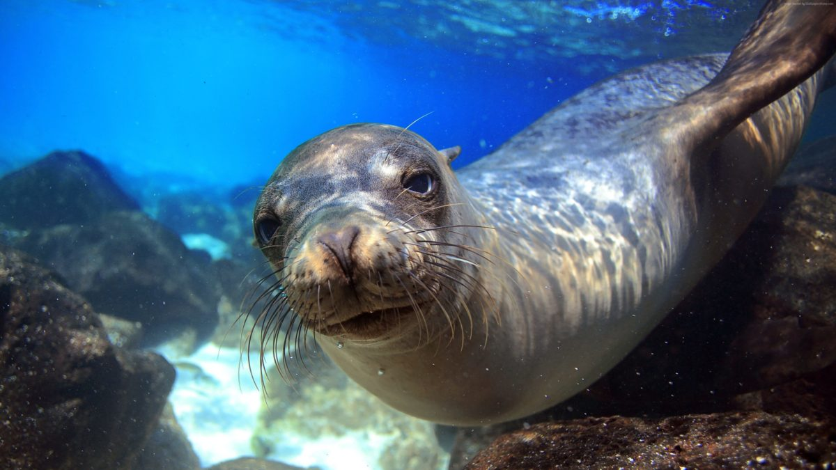 Sea Lions Have Taken Over La Jolla Cove In San Go And Local Humans Aren T All Thrilled About It For Now They Re Not Going Anywhere